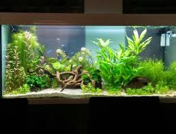 aquascaping twitter search