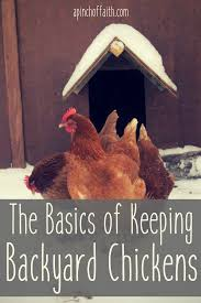 the basics of keeping backyard chickens a pinch of faith