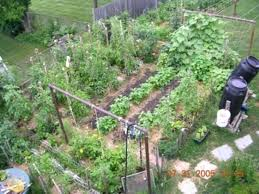 Backyard Plants Ideas Planting A Small Vegetable Garden Amazing Of Small Backyard