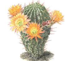 antique cactus ring holder images Vintage cactus print etsy jpg