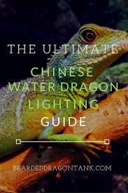 bearded dragon lighting guide why this is the best chinese water dragon lighting bearded dragon tank