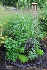 herb gardens planting a spring herb garden for homegrown herbal teas