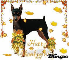thanksgiving pins miniature pinscher groom dog portrait painting by millersye