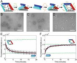 Dna Model Origami - programmable motion of dna origami mechanisms proceedings of the