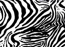 zebra pattern lumix zebra texture free stock photo public domain pictures