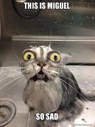 Sad Cat Meme - this is miguel so sad cat bath make a meme
