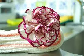 bouquet de fleurs roses blanches images gratuites blanc fleur pétale aliments rouge produire