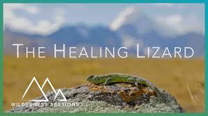 Seeking Lizard The Healing Lizard Of Bolivia Wilderness Sessions Earth