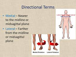 Directional Terms Human Anatomy Anatomical Language Ppt Video Online Download