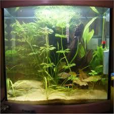 In Ben Versteeg zijn Aqua-40 leven 5 vijfstreep barbelen, 5 neon tetra\u0026#39;s en ongeveer 10 tot 15 cherry garnalen - ben_versteeg_Image1