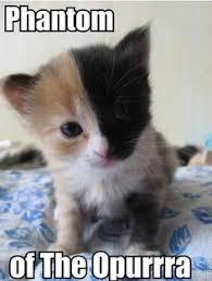 Cute Kitten Memes - emily bennett eab1225 on pinterest