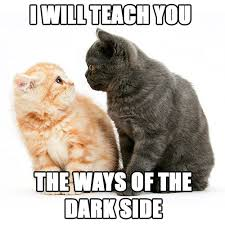 Star Wars Cat Meme - dark side cats meme jpg sfvrsn 0