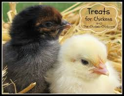 the chicken picking causes prevention u0026 solutions
