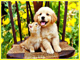 Cute Dogs Wallpapers by Cool Animals Hd Dog Images Download Dog Wallpapers Hairy Dogs