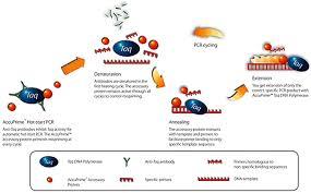 bureau de la pcr accuprime dna polymerases thermo fisher scientific