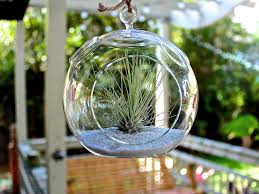 hanging air plant terrarium u2013 craftbnb