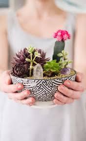 best 25 terrarium bowls ideas on pinterest succulent bowls