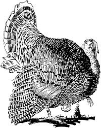 84 free turkey coloring pages with wild page free printable