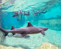 shark swim at discovery cove orlando