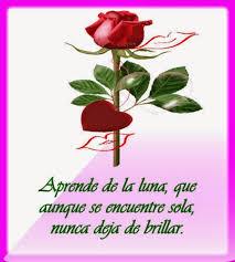imagenes flores bellisimas bellisimas flores hermosas con poemas para dedicar de amor ramos