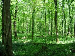 Kentucky forest images Free stock photo of forest at otter creek outdoor recreation area jpg