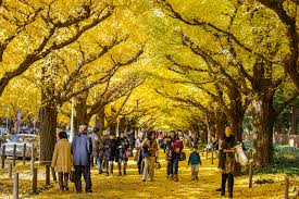 november tokyo 8 best spots in tokyo for viewing autumn leaves in 2016 fast japan