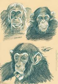 animal face sketches d0gdraw dustin resch animal face scribbles 3