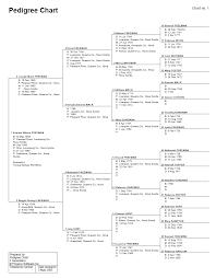 diagram example of family tree diagram