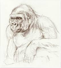 sketchbook gorillas i heart odd toed ungulates