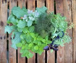 5 tips for designing an easy small indoor garden u2014 seedsheet