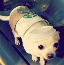 Dogs Halloween Costumes 25 Small Dog Halloween Costumes Ideas