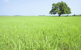 country field lush trees in day 1440x900 no 18 desktop