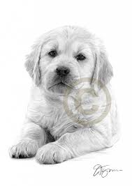 puppy pencil drawings pencil drawing of a golden retiever puppy