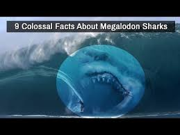 biggest megalodon shark biggest megalodon shark facts more information anunt gratis info