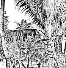 coconut palm gray scale palm tree digital download