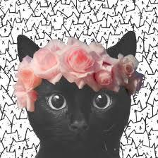 wallpaper cat whatsapp beautiful black cat daisy emoji image 3544436 by helena888 on