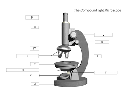 compound light microscope uses the microscope lesson 0362 tqa explorer