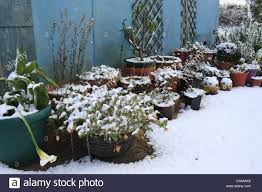 Winter Patio Plants by Snow Covered Plants And Flower Pots Outside A Florist In Winter