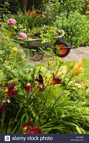 cleaning up summer garden full of flowers and wheelbarrow with