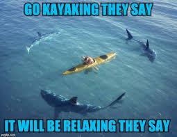 Funny Shark Meme - shark week imgflip