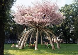 albero giardino la casa cresce dagli alberi in 80 anni focus it
