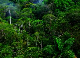 Tropical Rainforest Plant List - there are four very distinct layers of trees in a tropical rain
