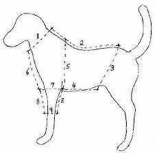 shirt pattern for dog free online dog clothes patterns
