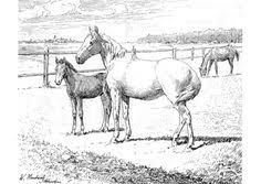 free printable horse coloring pages u2013 art valla