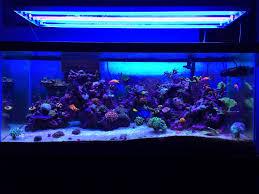 t5 aquarium light fixture best t5 aquarium light fixtures meganraley