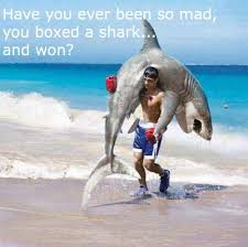 So Mad Meme - have you ever been so mad you boxed a shark and won funny meme