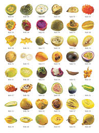all fruit names clipart free clipart