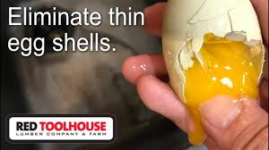 the best solution to fixing thin egg shells from your homestead