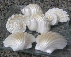 seashell soaps coconut seashells glycerin soap handmade by seasidesoapkitchen