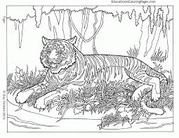 animal coloring pages teens coloring